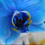 Creations By Julie - Brilliant Blue Orchid