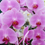 Creations By Julie - Pink Bell Orchids